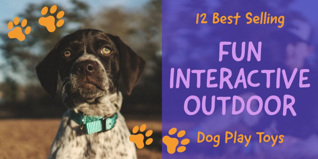 Best Selling Fun Interactive Outdoor Dog Play Toys