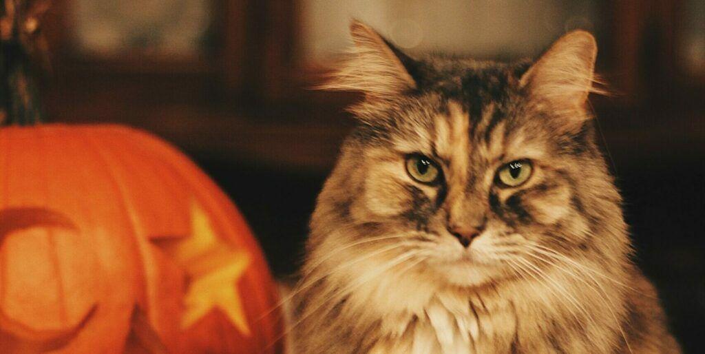 Cat-Next-To-Pumpkin
