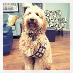 Chewbacca Inspired Dog Bandolier Costume