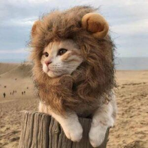 Lion Mane Cats Halloween Costume