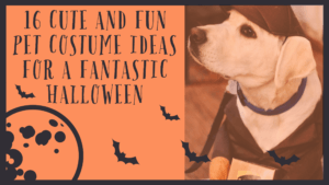 16 Cute And Fun Pet Costume Ideas For A Fantastic Halloween