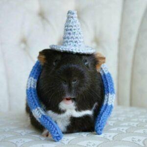 Small Pet Wizard Costume