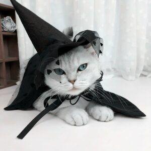 Wizard Cloak Cat Costume