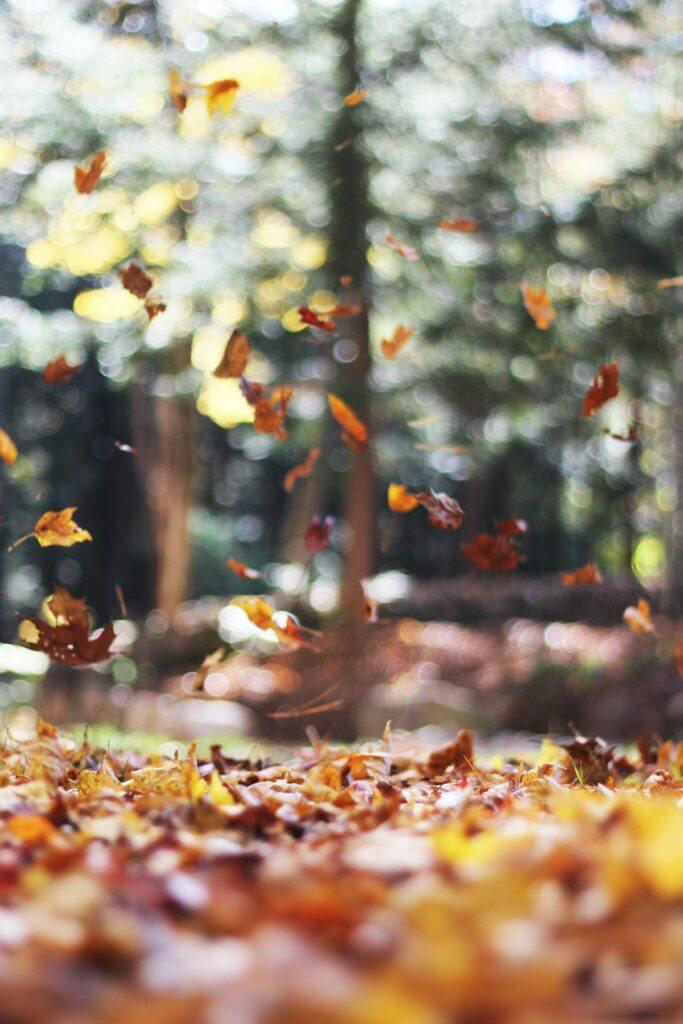 Cute Unique And Creative Autumn Décor Ideas 1